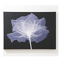 Graham & Brown - Printed canvasX ray rose wall art