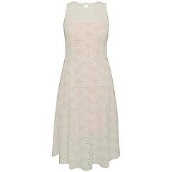 Celuu - Ivy 'Simone' lace skater dress