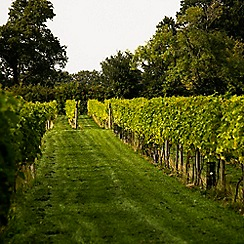 Buyagift - Wine and Beer Tasting with Vineyard and Brewery Tours for Two
