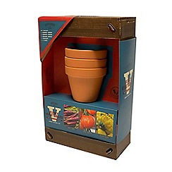 The Shed - Grow Your Own Funky Vegetables Indoor Starter Kit
