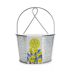 Flower Shop - Grow Your Own Narcissus and Muscari Outdoor Planter