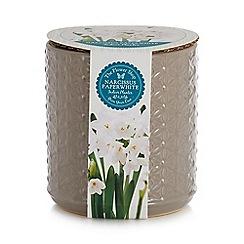 Flower Shop - Grey textured narcissus paper white indoor planter