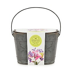 Flower Shop - Grow your own miniature sweet pea planter