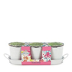 Wilson and Bloom - Set of 3 planters