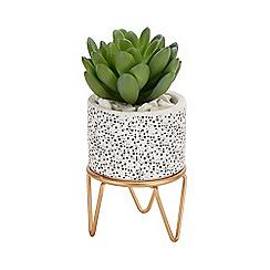 Luxe Edit - Artificial Mini Succulent