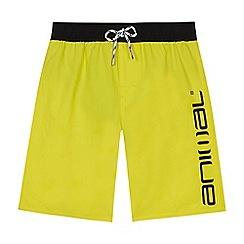 Animal - Boys' yellow logo print swim shorts