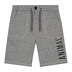 Animal - Boys' grey embroidered logo shorts