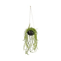 Abigail Ahern/EDITION - Artificial Hanging Succulent in Ceramic Pot