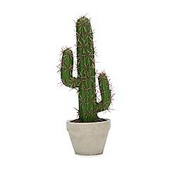 Abigail Ahern/EDITION - Artificial Mini Cactus in Concrete Pot
