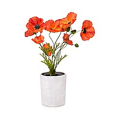 Debenhams - Grey pot of artificial poppies