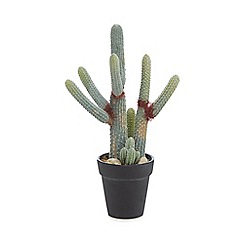 Parlane - Artificial cactus euphorbia in a pot