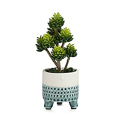 Home Collection - Artificial succulent in a footed pot