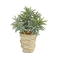 Parlane - Artificial peperomia plant in a rope pot
