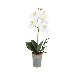 Parlane - Artificial white orchid phalaenopsis plant in a pot