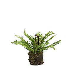Parlane - Artificial fern in soil