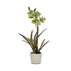 Parlane - Artificial Orchid Cymbidium plant in a ceramic pot