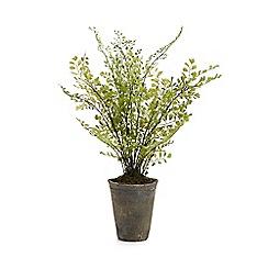 Parlane - Pot with artificial maidenhair fern