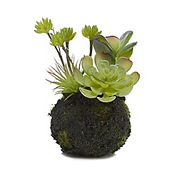 Parlane - Artificial succulent