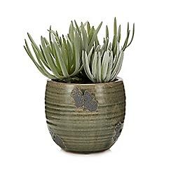 Parlane - Faux Crassula Potted Plant