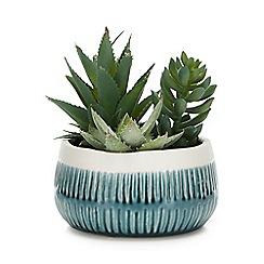 Debenhams - Stoneware Planter with Artificial Succulent