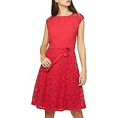 Dorothy Perkins - Tall raspberry lace fit and flare dress