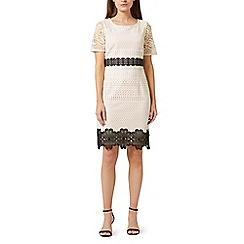 Precis - Petite lara lace dress