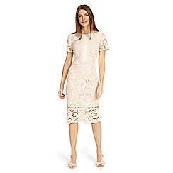 Phase Eight - Pink darena lace dress