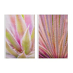 Art for the Home - Blushed tropics printed canvas