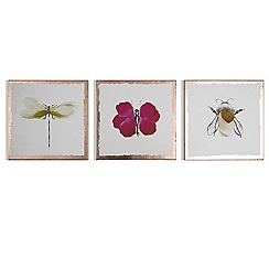 Art for the Home - Beautiful bugs printed canvas