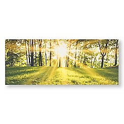 Art for the Home - Tranquil forest fields printed canvas