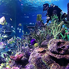 Buyagift - Diving with Sharks Experience at Skegness Aquarium Gift Experience
